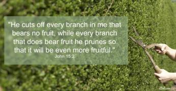 John 15-2